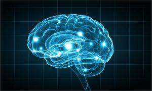 brain stem cells 300x180